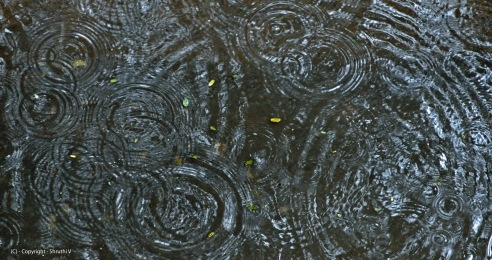 ripples-in-the-rain